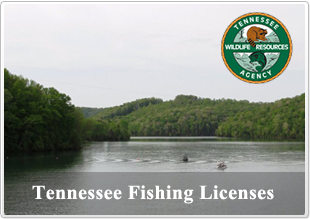Norris lake tennessee information lake norris tn for Buy tennessee fishing license