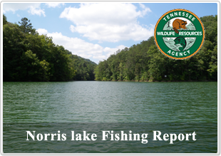 Norris lake tennessee information lake norris tn for Norris lake fishing report