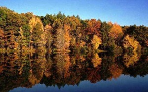 norris-lake-fall_800_500_crop_fill